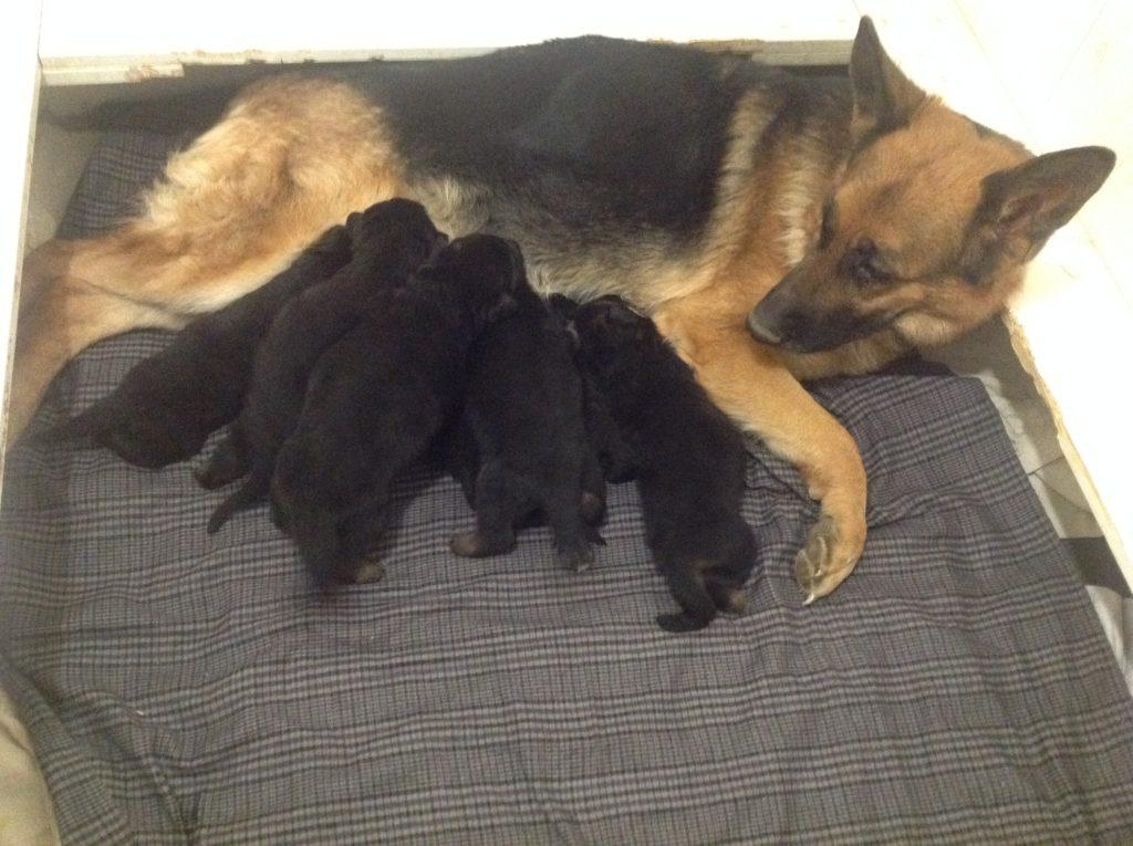puppies 038